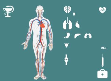 תחושת בטן: כך חיידקים משפיעים על המוח וההתנהגות שלכם
