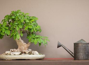 Art of Bonsai (Basic workshop)