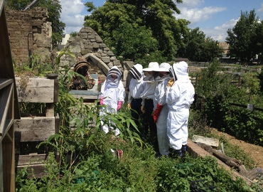 Become a Buzzing Beekeeper for a Day