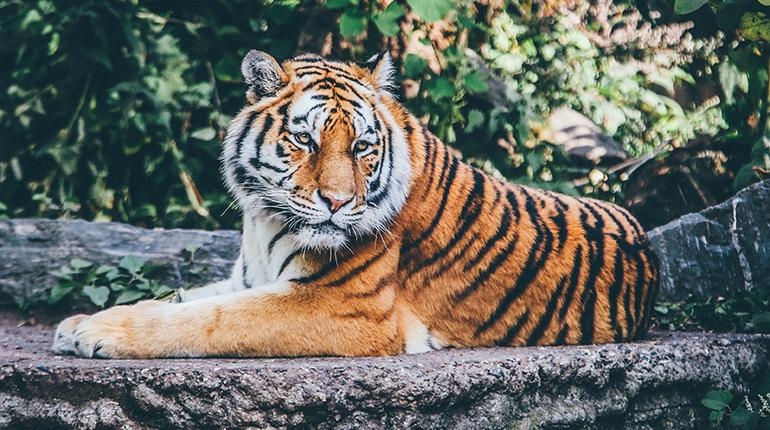 Photography Workshop at Animal Conservation Park