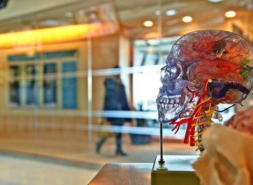 LDN Talks @ Night   Neuroscience of Productivity