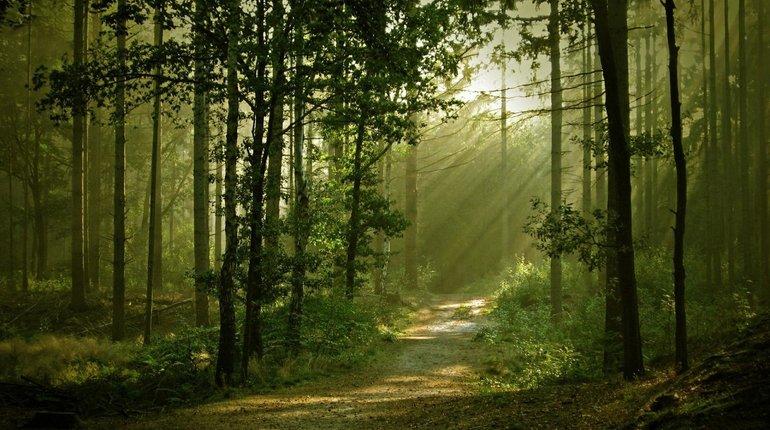 Enchanted Woodland Walks