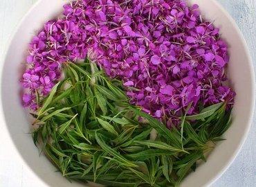 Herbal Tea Masterclass – Rosebay Willow herb