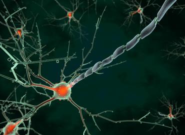 LDN Talks| Neuroscience of Emotions