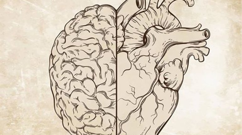 Neuroscience of Love | Bristol