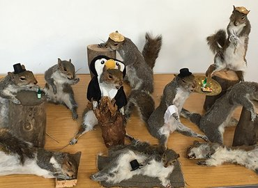 Taxidermy Class - Make Your Own Stuffed Squirrel