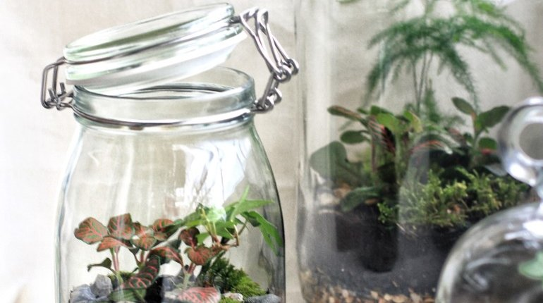 Build your own Glass Terrarium for Christmas