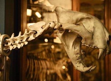 Darwin, Dodos & more! Photoworkshop Zoological Magic