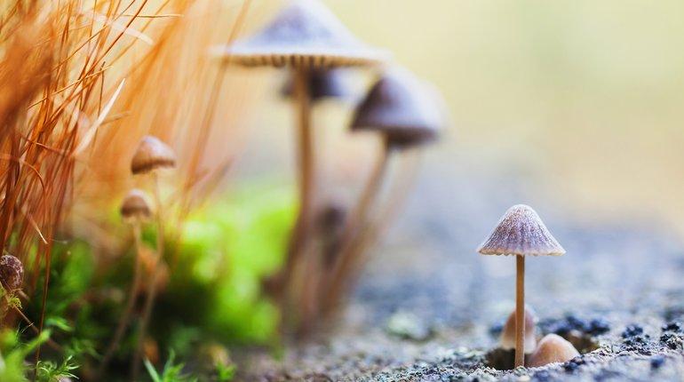 Funzing Talks | Healing Potential of Magic Mushrooms
