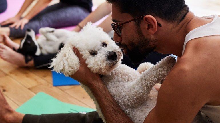 DOGA - Yoga With Dogs: Kensal Green